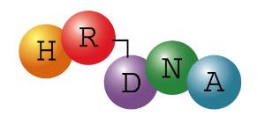 HR-DNA